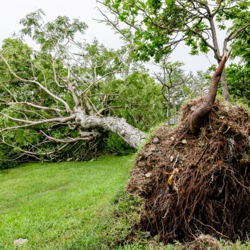 My Tree Has Fallen During A Storm - What Do I Do Now?