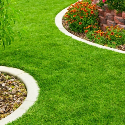 How To Rescue A Dying Lawn